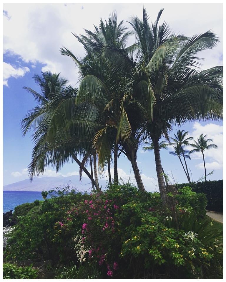 Jessi Dalton Photography - Maui - Hawaii_0022