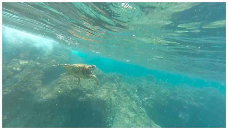 Jessi Dalton Photography - Maui - Hawaii_0027