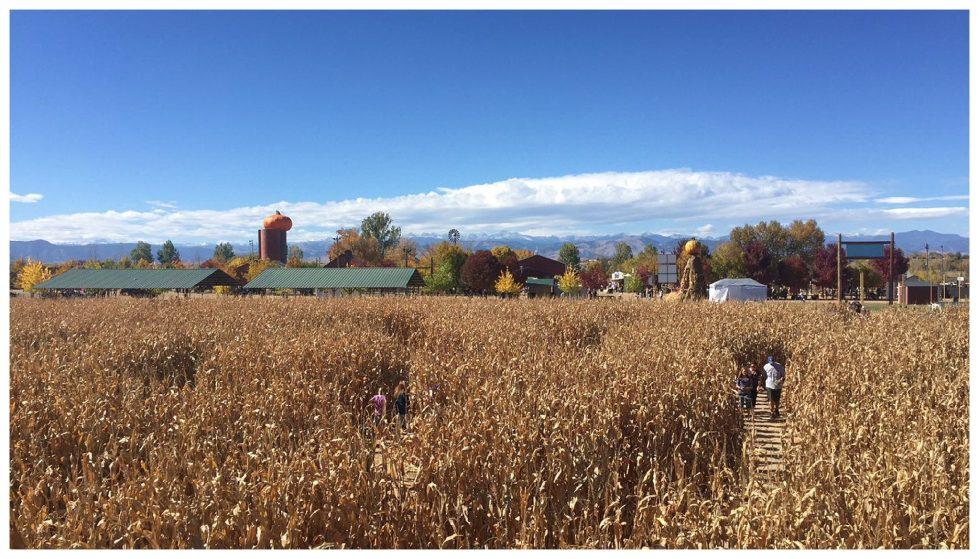 jessi-dalton-photography-the-tarbets-jessizach-colorado-fall-corn-maze-anderson-farms_0006